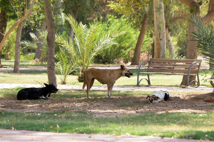 تحویل80 قلاده سگ بی صاحب به حامیان حیوانات در تهران
