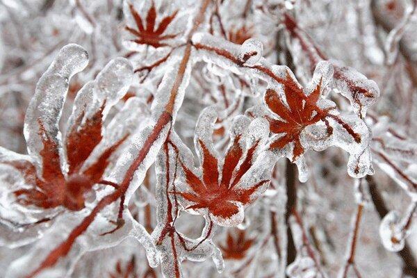 سرمازدگی و یخ زدگی ، کشاورزان مراقب باشند
