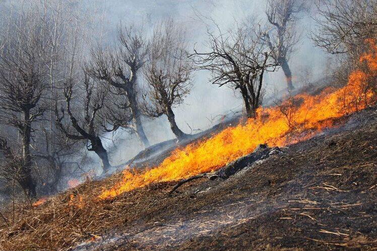 لزوم اطلاع رسانی درباره پیشگیری از حریق جنگل ها