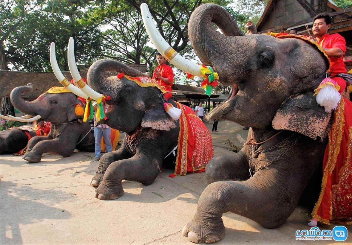 حقایقی در خصوص سواستفاده از فیل ها در صنعت گردشگری