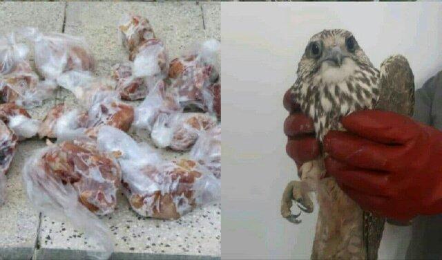 انهدام چهار گروه صیاد حرفه ای پرندگان شکاری در تربت جام و جغتای
