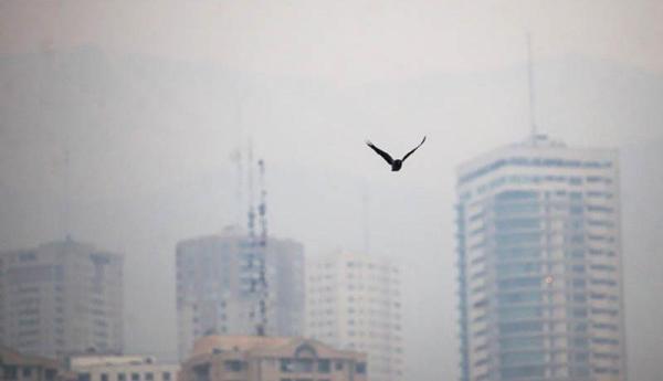 آلودگی هوا پارک های تهران را تعطیل کرد