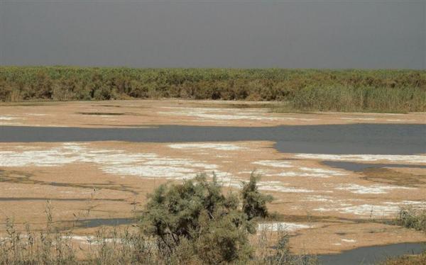 تاثیر 20 درصدی خشک شدن تالاب ها بر گرمایش زمین