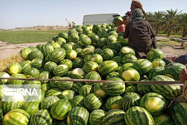 خبرنگاران 6 هزار و 500 تُن هندوانه از مرز رازی خوی صادر شد